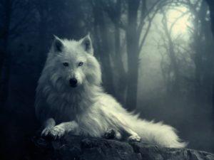White Wolf image